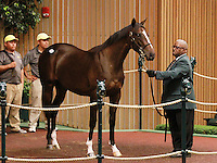 September 10, 2014: Hip #549 Tiznow - Countess Lemonade filly consigned by Stone Farm sold for $1,100,000 to Stonereath Stud at the Keeneland September Yearling Sale.   Candice Chavez/ESW/CSM