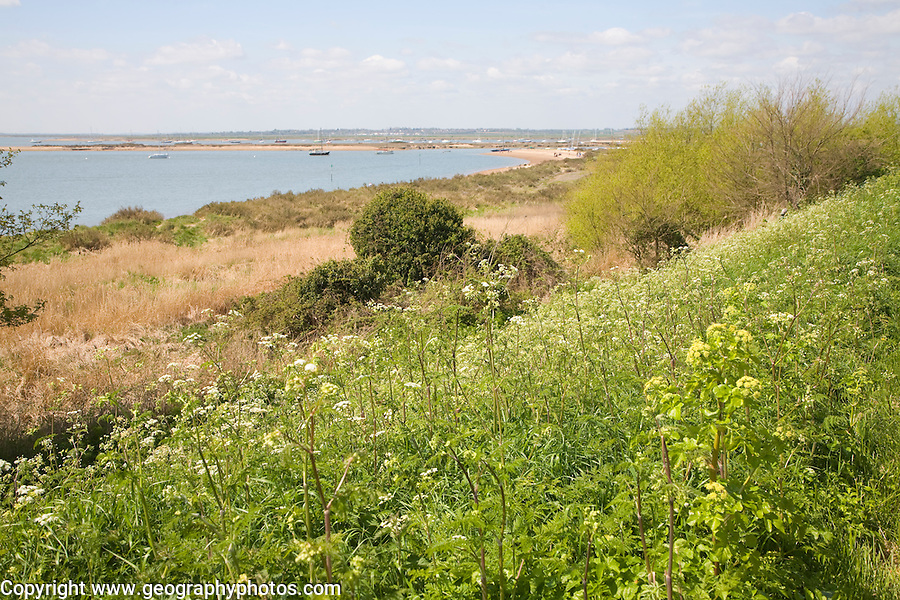 View of Blackwater river estuary, West Mersea, Mersea Island, Essex, England