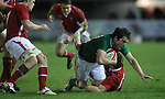 Wales centre Steffan Hughes hauls down Tom Daly..Under 20 Six Nations.Wales v Ireland.Eirias - Colwyn Bay.01.02.13.©Steve Pope