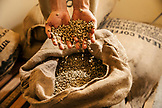 BELIZE, Punta Gorda, Toledo, guests can participate in a Bean to Cup Workshop where they'll tour the coffee plant, and be shown the process of taking a raw bean to a roasted bean, Belcampo Belize Lodge and Jungle Farm