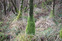 Stocks reservoir, Gisburn Forest, Forest of Bowland.