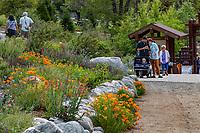 Southern California Montane Botanic Garden