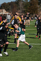 Pleasanton Cavaliers U12 Action 2013. (Photo by /AGP Photography)