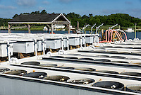 Cherrystone aqua farm hatchery tanks produce clam and oyster products, Cheriton, Virginia, USA
