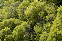 Sunlight shining on treetops at spring, Mirabel Village, Ardeche, France.