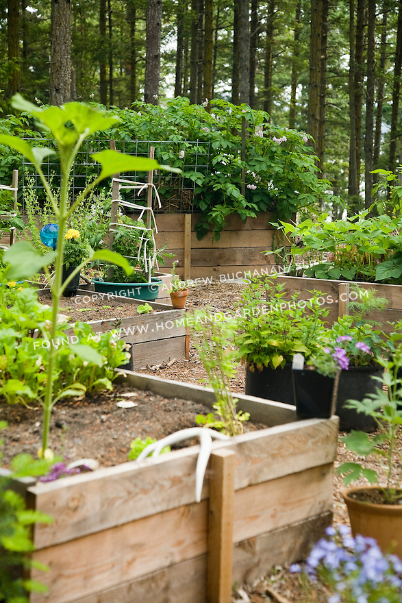 a raised-bed vegetable garden on Washington State's Orcas Island is situated on a hilltop clearing to guarantee maximum sun among tall evergreen trees