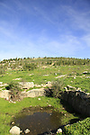 Israel, Shephelah, Monks' Valley in Ben Shemen forest