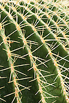 Spines and ribs of barrel cactus