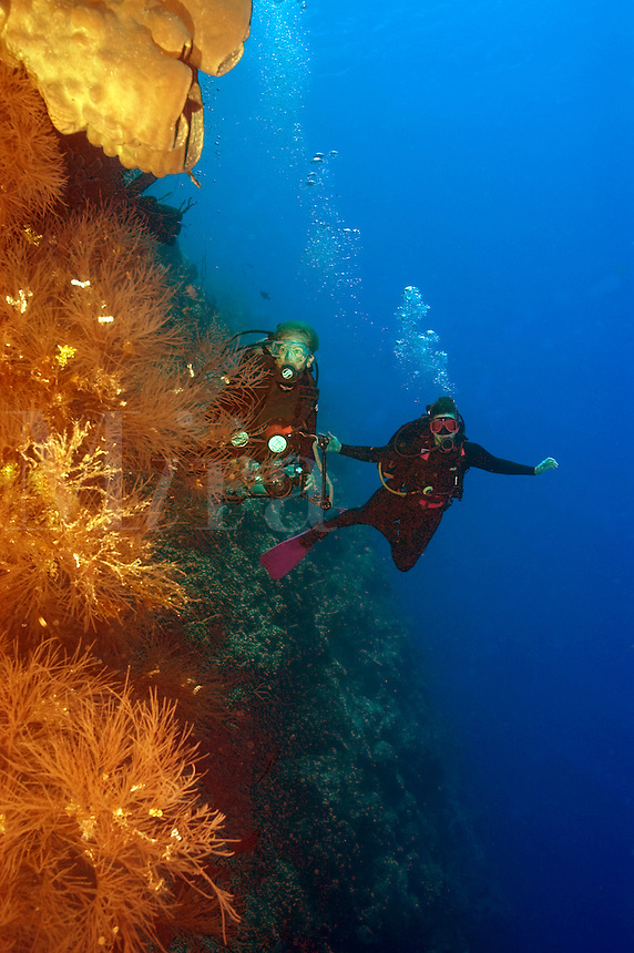 Two female scuba divers (MR) along the wall in Little Cayman, Cayman Islands.