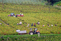 Bourgogne Beaujolais Cru Villages - stock photo samples