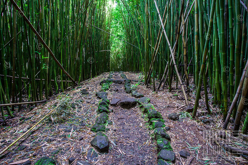 Rocks line the Pipiwai hiking trail through a thick forest of bamboo, Haleakala National Park, Kipahulu, Maui.