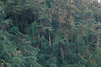 Montane tropical forest; bamboo understory; Ecuador, Prov. Zamora-Chinchipe, Tapichalaca
