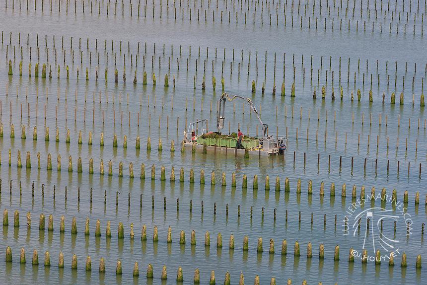 France, Normandie, Manche (50), conchlyliculture, myticulture, moules de bouchot (vue aérienne) // France, Normandy, Manche, mussles (aerial view)