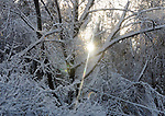 Sunrise through the snow covered trees seen in Vernon, after the record breaking snow storm brought down trees and utility wires leaving more than 700, 000 CL+P customers in the dark, Sunday, October 30, 2011. (Jim Michaud/Journal Inquirer).