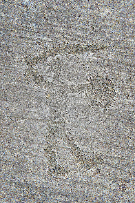 Petroglyph, rock carving, of a warriors with a shield and sword. Carved by the ancient Camuni people in the iron age between 1000-1200 BC. Rock no 6, Foppi di Nadro, Riserva Naturale Incisioni Rupestri di Ceto, Cimbergo e Paspardo, Capo di Ponti, Valcamonica (Val Camonica), Lombardy plain, Italy