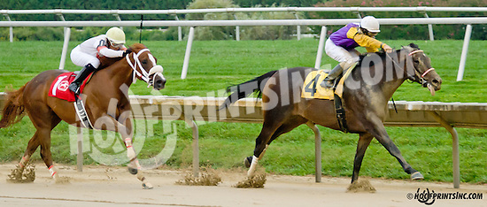 Unzapped winning The New Castle Stakes on Owners Day at Delaware Park on 9/13/14