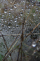 Dew on Spiderweb, Prevost Island, Gulf Islands National Park Preserve, British Columbia, Canada