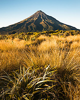 Sunrise over Taranaki, Mt. Egmont and alpine vegetation, Egmont National Park, North Island, New Zealand, NZ