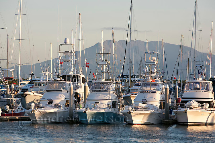 Game fishing boats in Marlin Marina.  The waters off Cairns are world renowned for black marlin fishing.  Cairns, Queensland, Australia