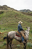 USA, Oregon, Joseph, Cowboy Todd Nash rides past some elk up Big Sheep Creek in Northeast Oregon
