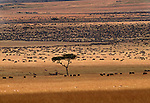 Wildebeest herds on the vast plains of the Masai Mara National Reserve, Kenya