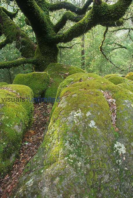 Mossy rocks and fern-covered tree branches, Northern California, USA.