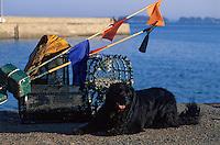 Europe/France/Bretagne/56/Morbihan/Golfe du Morbihan: Départ pour la pêche aux homards