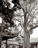 CHINA, Putou Shan, tree trunk with ancient Haoyang Cave And Temple in the background (B&W)