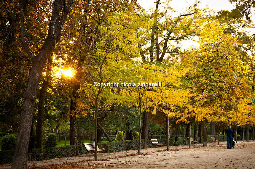 Man with a cart and his baby in an avenue of the retiro park in madrid