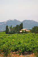 vineyard dentelles de montmirail le cellier des princes chateauneuf du pape rhone france