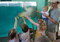 Kids feeding lettuce two sea turtles, Seaturtle inc., South Padre Island, Texas