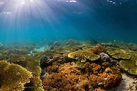 Reefscene in Bangka Island Sulawesi