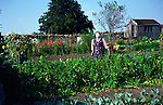 Scarecrow in cottage vegetable garden, Marshfield, Wiltshire, England