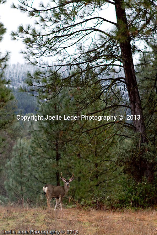 Joelle Leder Photography ©  2013