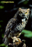 OW06-013z  Great horned owl - Bubo virginianus