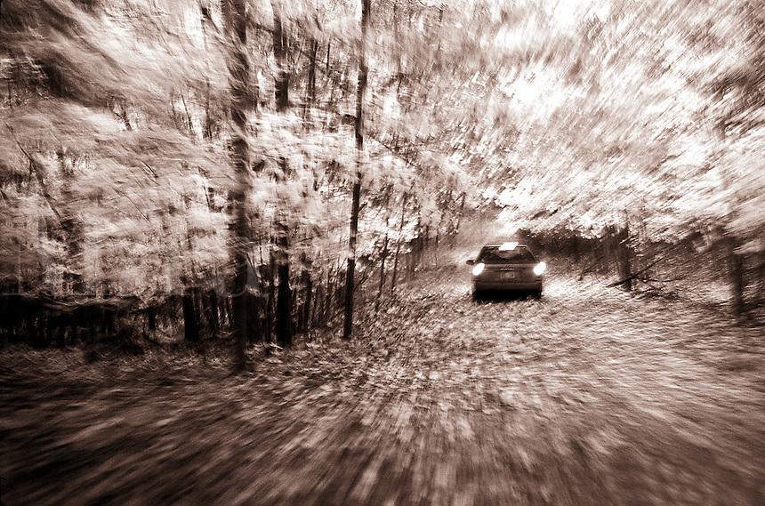 Car on a leafy road.