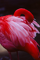 Flamingo, Fuji Velvia 100 Film 2020