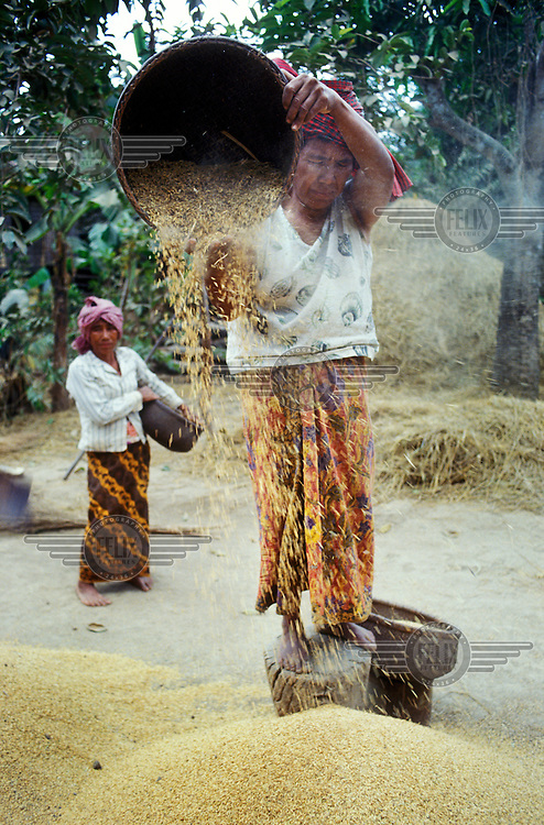 Peasant woman winnowing chaff from the rice harvest.