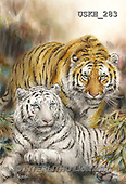 Kayomi, REALISTIC ANIMALS, REALISTISCHE TIERE, ANIMALES REALISTICOS, cute animals, lustige Tiere, animalitos diver, paintings+++++,USKH283,#A#
