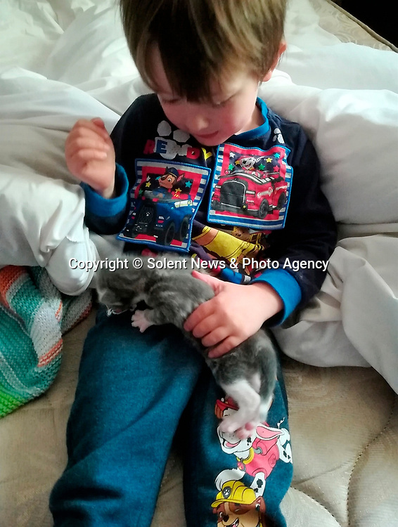 Pictured:  Miles Povey with Rocky as a kitten<br /> <br /> Little Miles Povey and his new kitten are so inseparable that when he started school for the first time his pet came too.  The five-year-old walks to and from school every day accompanied by five month old Rocky.<br /> <br /> The grey and white quarter Persian kitten even joins him in classes and has become a firm favourite with Miles' school pals.  Miles joined reception at Oakwood Primary School in Southampton, Hants, last month.  SEE OUR COPY FOR DETAILS.<br /> <br /> © Solent News & Photo Agency<br /> UK +44 (0) 2380 458800