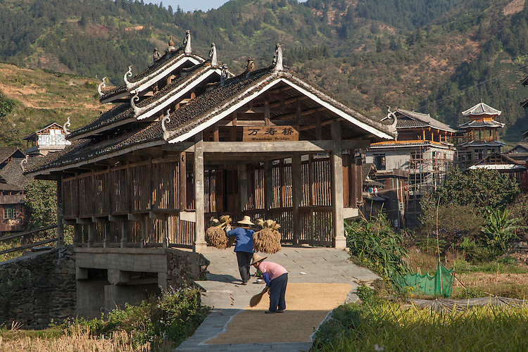Drying rice in front of Wind & Rain Bridge in Chengyang Village, Guizhou Province