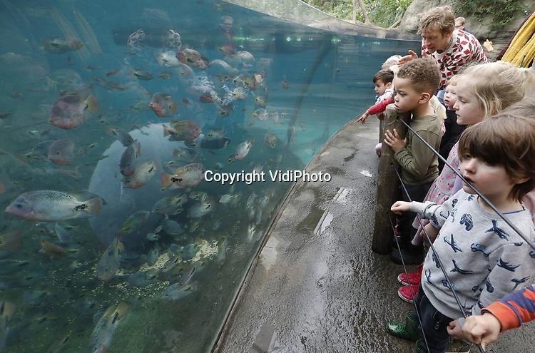 Foto: VidiPhoto<br /> <br /> ARNHEM &ndash; De meest spannende plek om voorgelezen te worden is ongetwijfeld een dierentuin. Voor Burgers&rsquo; Zoo in Arnhem was dat woensdag reden om de Flamingo-kleuterklas van de Jan Ligthartschool uit Arnhem uit te nodigen om in het kader van de Nationale Voorleesweek de kleuters voor te lezen in de Mangrove van het park. Behalve dat het daar lekker warm is, is er ook van alles te zien en te beleven. Voor het voorlezen was dan ook minder belangstelling, dan voor het enorme aquarium met vissen een zeekoeien.