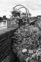 """Chiswick. Greater London. Potted Plants display """" - Chiswick Mall and embankment  Leading from Chiswick to Fulham Reach RC. Sunday.  24.07.2016  [Mandatory Credit: Peter Spurrier/Intersport-images.com]"""