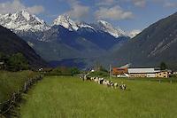Sheep and mountains, Imst district, Tyrol/Tirol, Austria, Alps.