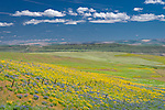 Columbia Hills State Park, Washington:<br /> Fence line among the rolling hills of lupine and balsamroot