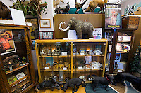 Display case at the International Cryptozoology museum, Portland ME, USA