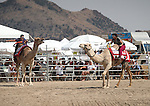 From left, Joe Murray and Marcella Corona compete in a media exhibition race at the 56th annual International Camel &amp; Ostrich Races in Virginia City, Nev. on Friday, Sept. 11, 2015. <br /> Photo by Cathleen Allison