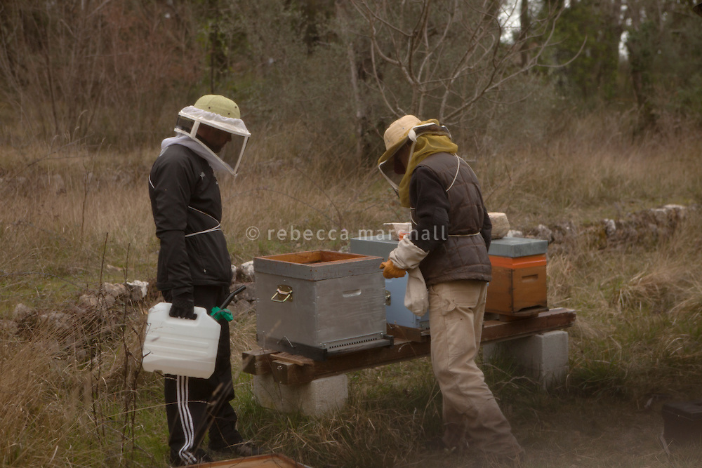 Beekeeper Amanda Dowd and her helper feed sugared water to honeybees after placing beehives in their new location after transhumance, Pont du Loup, Alpes Maritimes, France, 18 February 2014. This photograph was taken through a beekeeper's veil.