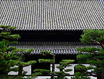 Japanese black pines, pinus thunbergii, in front of a Tofukuji temple building roof in Kyoto, Japan