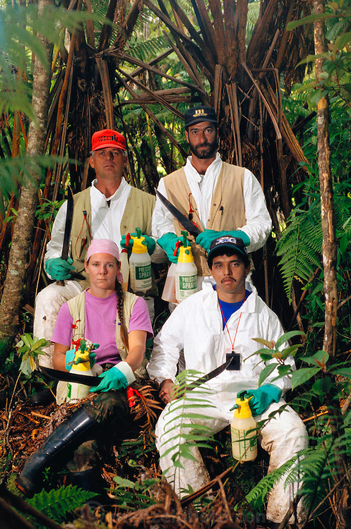 "Rainforest ""weedbusters"" chop & apply herbicide to invasive weeds. The ?weedbusters? of Volcanoes National Park on the island of Hawaii defend the park from the most vexatious invasive plants (Chris Zimmer and Lowell Thomas, rear; Kim Tavares and Bob Mattos, front). They are National Park employees who use machetes and weed killing chemicals to rid sections of forest of non-native invasive plants such as Kahili Ginger, Banana Poka, and Kikuyu (African grass)..Volcano National Park, Big Island, Hawaii. USA. MODEL RELEASED.."